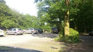 Woodland dog walk and dog-friendly pub, Essex - Driving with Dogs