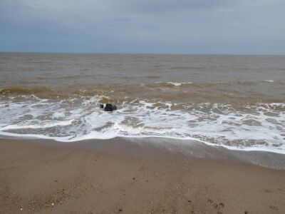 Endless sandy and dog-friendly beach, Lincolnshire - Driving with Dogs