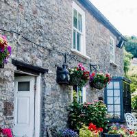 A38 Woodland walk and charming village inn, Somerset - A38 dog-friendly pub and dog walkjpg