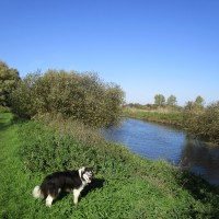 Upstreet riverside dog walk from a dog-friendly pub, Kent - Kent dog-friendly dog walk and dog-friendly pub