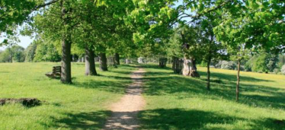 Country park dog walks near Harlow, Hertfordshire - Driving with Dogs