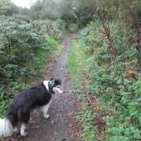 A487 hilltop dog-friendly inn near Fishguard, Wales - IMG_6060.JPG