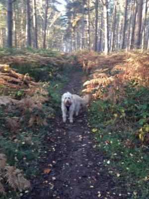 A46 - Oversley Woods dog walk - Alcester, Warwickshire - Driving with Dogs
