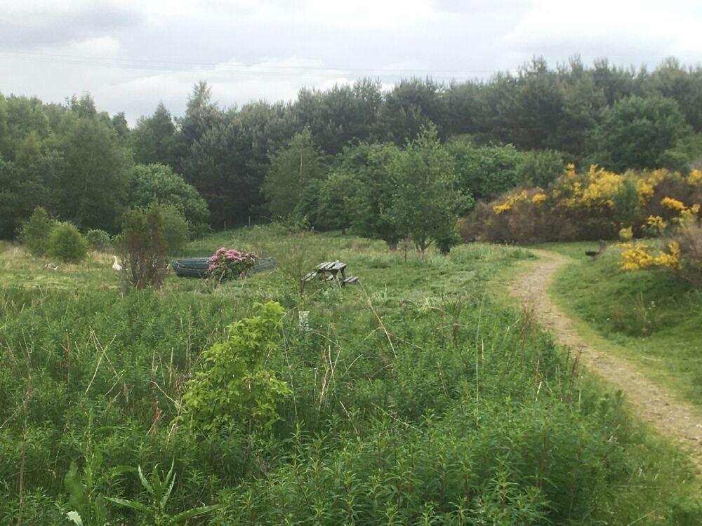 Glebe Nature Reserve, Scotland - 194ECE7F-51A4-406E-B3D5-727F34A5EE3E.jpeg