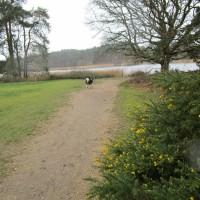 Historic lake dog walk, Surrey - Surrey dog walks.JPG