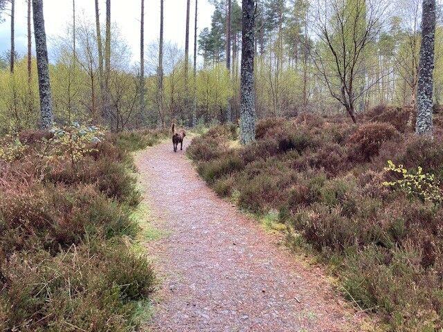Skelbo Forest dog walk, Scotland - Skelbo 4.jpg