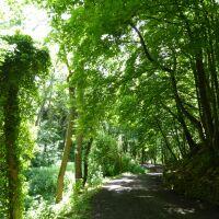 Historic woodland and beach near Bridlington, East Yorkshire - Yorkshire dog-friendly beaches and dog walks