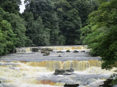 Spectacular Falls dog walk and dog-friendly inn, North Yorkshire - Driving with Dogs