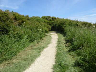 South Landing dog walk and dog-friendly beach, East Yorkshire - Driving with Dogs