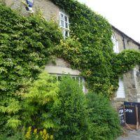A689 dog-friendly cafe/pub and a short walk, County Durham - Dog walks in County Durham