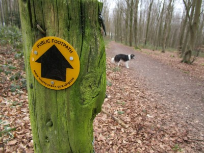 A286 country park dog walk, West Sussex - Driving with Dogs