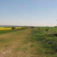 Historic dog walk, Berkshire - Berkshire dog walk