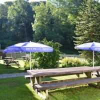 Dog-friendly inn with B&B and great dog walks, Somerset - Somerset dog friendly pub and dog walk