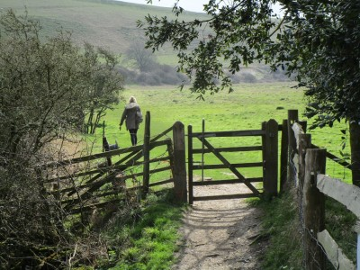 Seven Sisters Country Park dog walks, East Sussex - Driving with Dogs