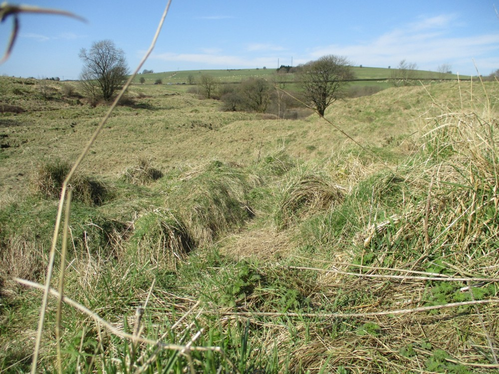 Nature Reserve dog walk near Cheddar, Somerset - Somerset nature reserve dog walk.JPG