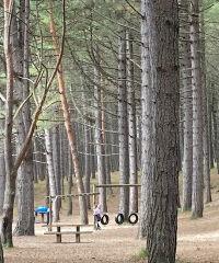 Roseisle country park with the dog, Scotland - 8C339BD1-01AC-4702-8124-CB2E82B9B6CF.jpeg