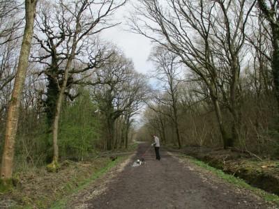 A350 woodland dog walk near Westbury, Wiltshire - Driving with Dogs