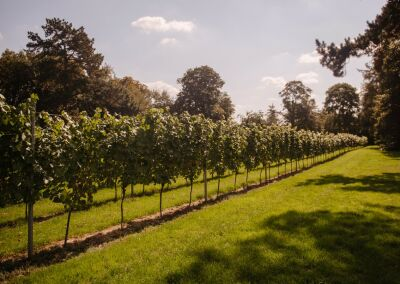 Dog friendly vineyard with pizza and beautiful country walks, Kent - Driving with Dogs