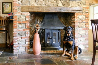 A30 dog walk and dog-friendly pub, Somerset - Driving with Dogs