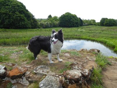 King of the Castle picnic spot and dog funtime, Lincolnshire - Driving with Dogs