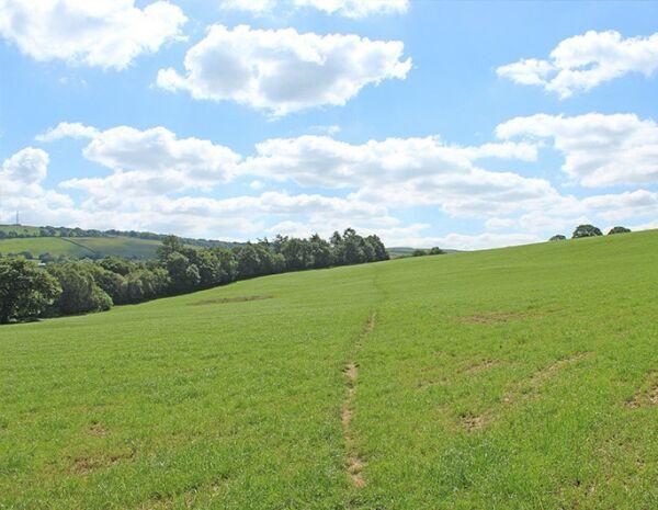 1. Whitleas field.jpg