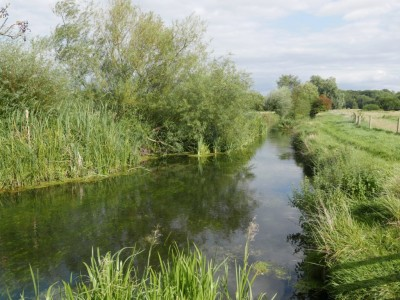 A32 Meon Valley country pub and dog walk, Hampshire - Driving with Dogs