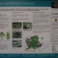 M25 Junction 10 dog walk near Cobham, Surrey - Dog walks in Surrey