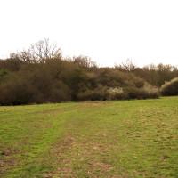 M25 Junction 26 Forest dog walk and dog-friendly pub, Essex