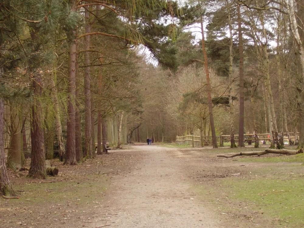 M25 Junction 29 country park dog walk, Essex - Dog walks in Essex