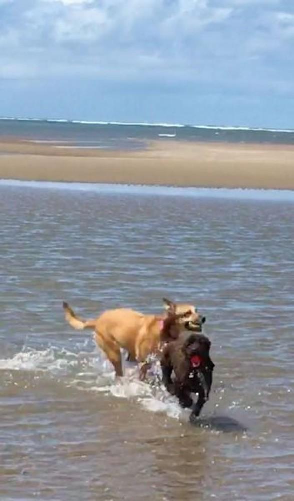 Saunton Sands dog-friendly beach, Devon - sadie and henry.jpeg