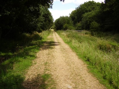 M27 Junction 9 dog walk, Hampshire - Driving with Dogs