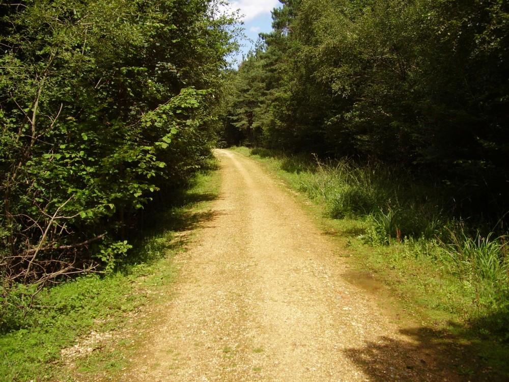 M27 Junction 9 dog walk, Hampshire - Dog walks in Hampshire