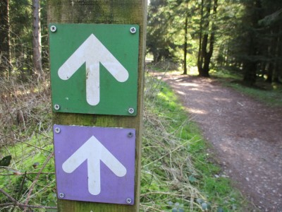 Woodland dog walks with one accessible route, Somerset - Driving with Dogs