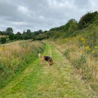 National Herb Centre Walks, Oxfordshire - 380ED680-1118-45E8-B22D-FA97B56238F2.jpeg