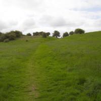 M40 Junction 16 dog walk and dog-friendly pub in Henley-in-Arden, Warwickshire - Dog walks in Warwickshire