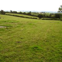 M48 hidden dog walk at Severn Way Services, Gloucestershire - Dog walks in Gloucestershire