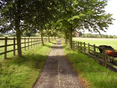 M56 Junction 7 dog walk and cream tea, Cheshire - Driving with Dogs