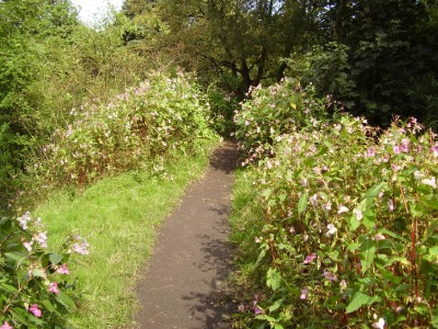 Woodland dog walk near the M60, Greater Manchester - Driving with Dogs
