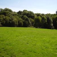 M60 Junction 24 dog walk, Cheshire - Dog walks in Cheshire