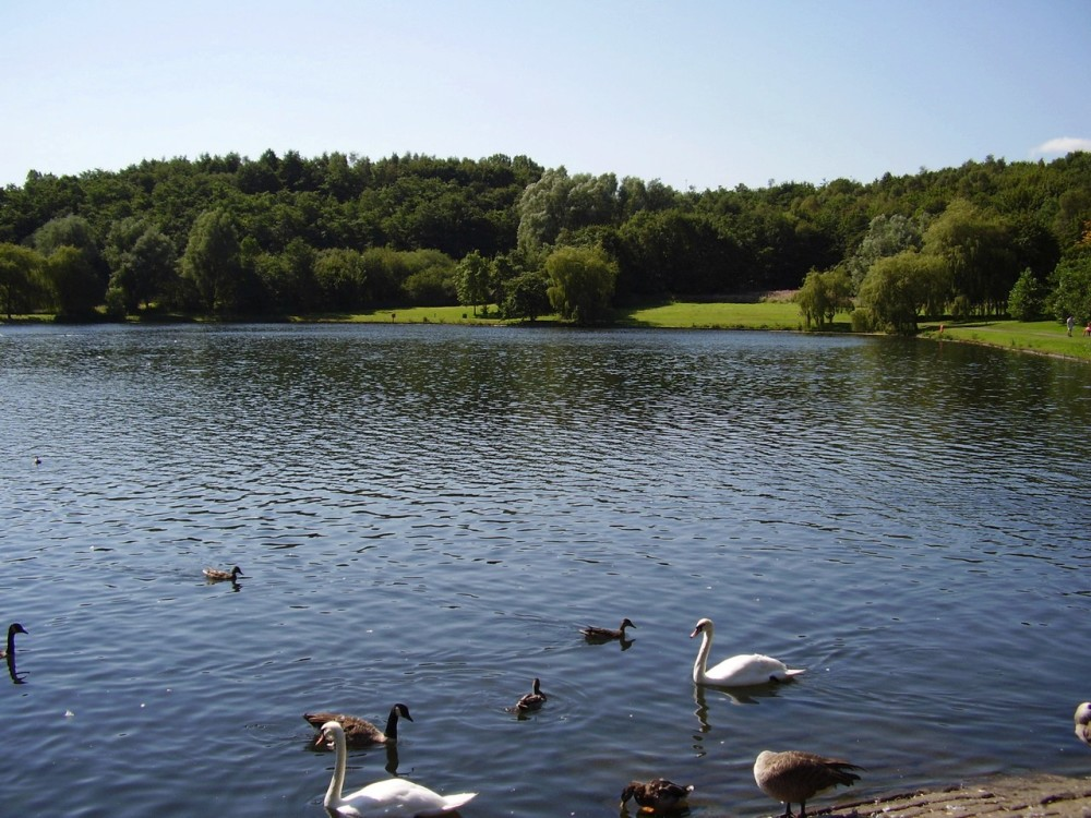M61 Junction 2 country park dog walk near Farnworth, Lancashire - Dog walks in Lancashire
