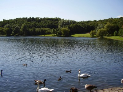 M61 Junction 2 country park dog walk near Farnworth, Lancashire - Driving with Dogs