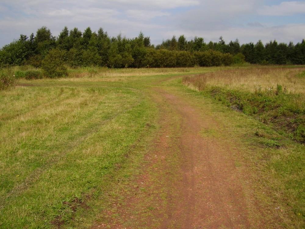 M62 Junction 8 dog walk near St Helens, Cheshire - Dog walks in Cheshire