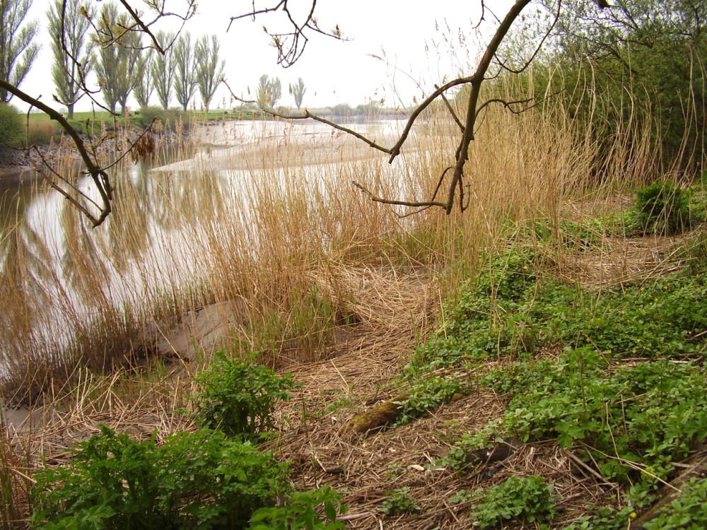 M62 Junction 36 riverside dog walk near Goole, East Yorkshire - Dog walks in Yorkshire