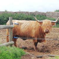 Colney Heath dog walk with optional extension to take in farm animals, Hertfordshire - IMG_20200715_111127.jpg