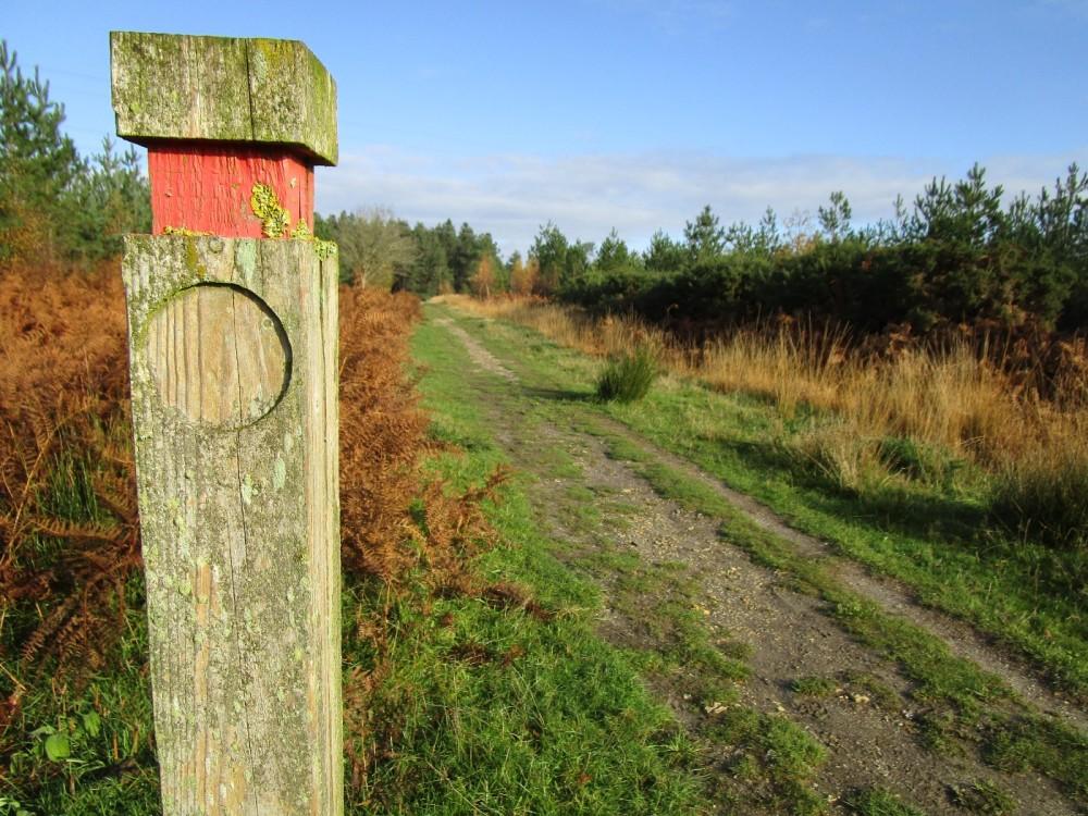 A35 Forest dog walk, Dorset - IMG_6178.JPG