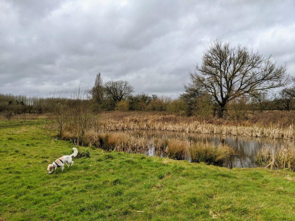 Local Dog Walk: Wheatacre Woods, Lancashire - IMG_20200307_142236.jpg