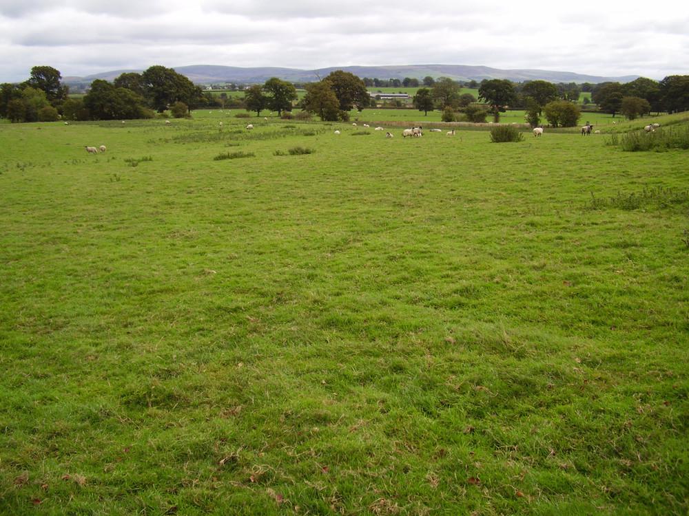 M6 Junction 43 River Eden dog-friendly pub and dog walk, Cumbria - Dog walks in Cumbria
