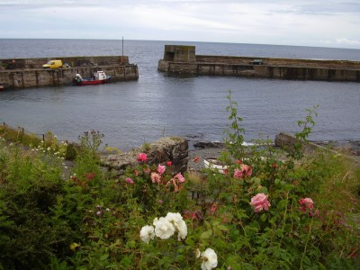 Coast walk with dog-friendly beach and pub, Northumberland - Driving with Dogs