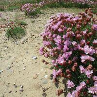 Dog walk on Heath and Beach near Westleton, Suffolk - Heath and beach dog walks in Suffolk