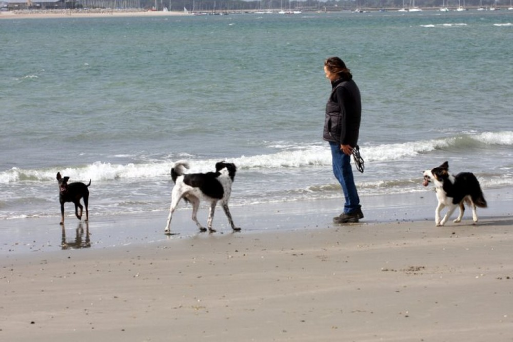 West Wittering dog-friendly beach, West Sussex - Dog walks in Hampshire